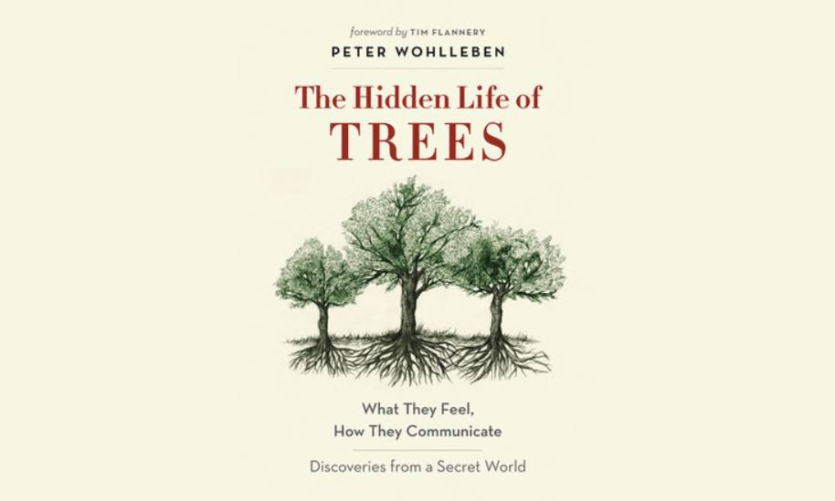 Book for October 2018 LDSES discussion.  I have read a wonderful book by Jane Goodall which covers this topic (and more), Seeds of Hope: Wisdom and Wonder from the World of Plants, 2013. You'll never feel the same about plants and specifically trees and their interrelationships after learning about the ways trees communicate. — Merikay