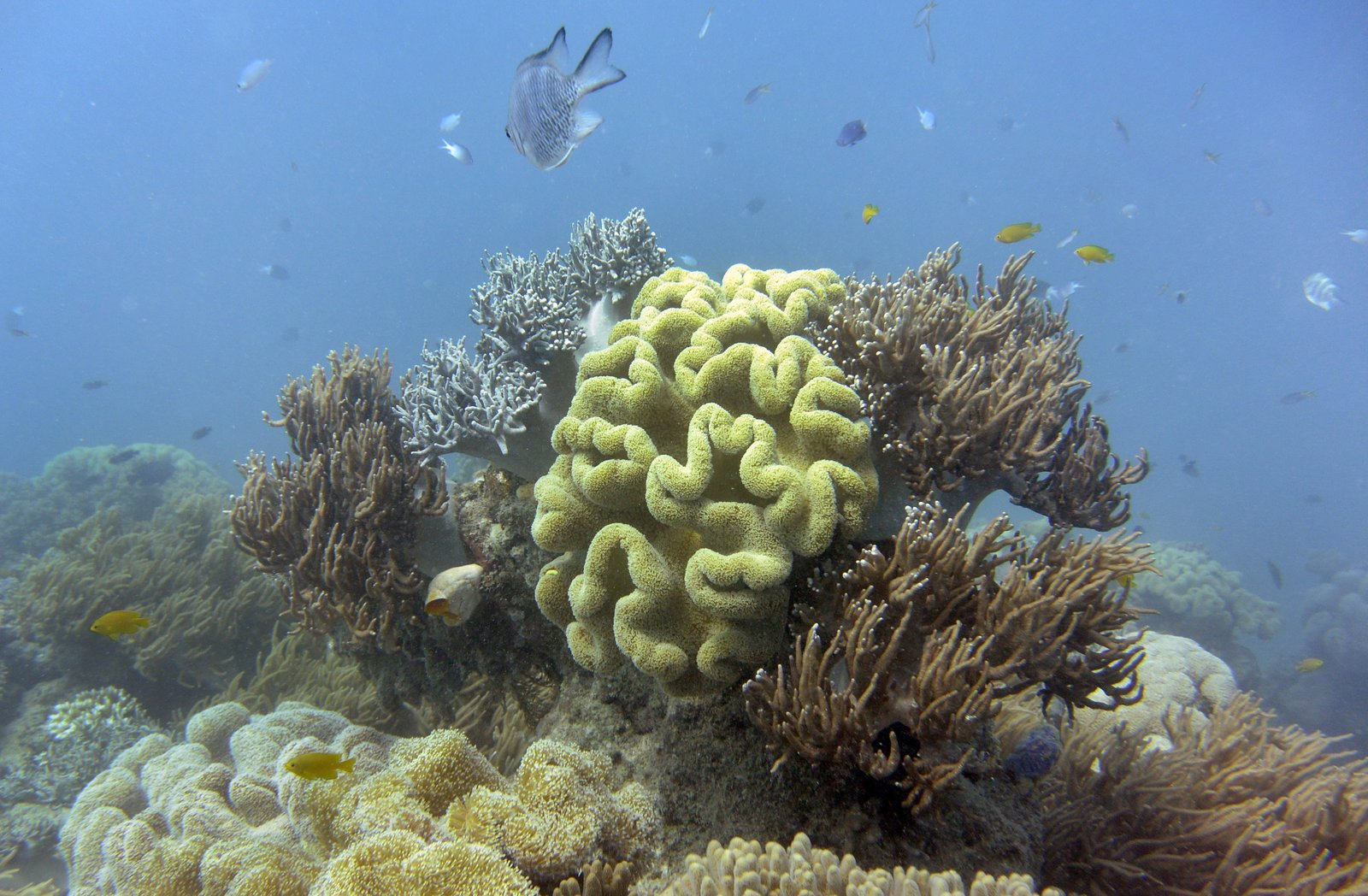 """The Australian federal government has downgraded its long-term outlook of the Great Barrier Reef from """"poor"""" (2014) to """"very poor"""" (2019), and it says that climate change is the most significant threat.   William West /AFP/Getty Images    https://www.npr.org/2019/08/30/755846052/australia-says-great-barrier-reef-has-very-poor-outlook-climate-change-to-blame"""
