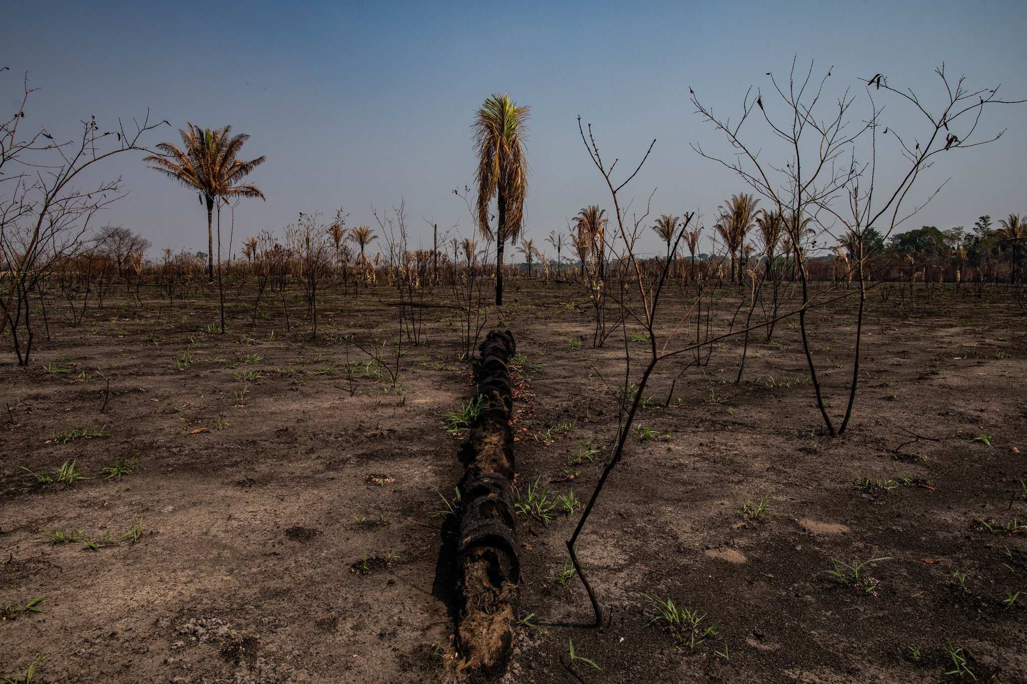 As fires rage across the Amazon, a growing number of scientists are raising the alarm about a nightmare scenario that could see much of the world's largest rainforest erased from the earth. NY Times, 8/30/2019   https://www.nytimes.com/2019/08/30/world/americas/amazon-rainforest-fires-climate.html