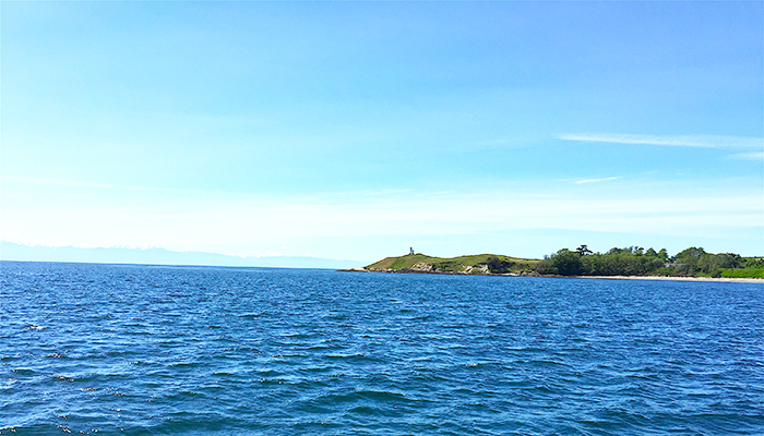 TSJ Blog - 3 best whale watch tours (cattle point).jpg