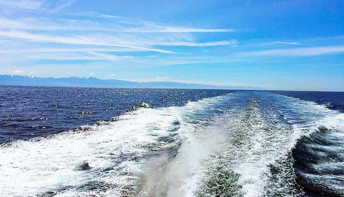 TSJ Blog - 3 best whale watch tours (ocean).jpg