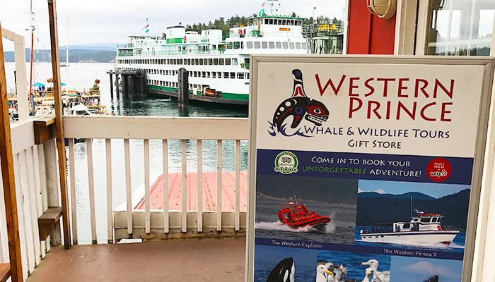TSJ Blog - 3 best Whale Watch Tours (WP).jpg