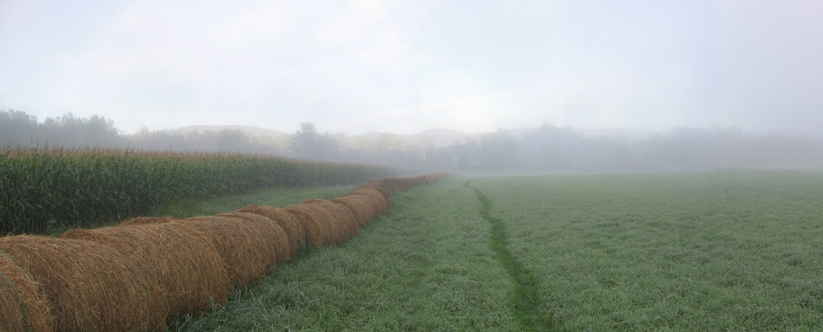 Tad  Ames - farm wmst foggy morning_crop.jpg