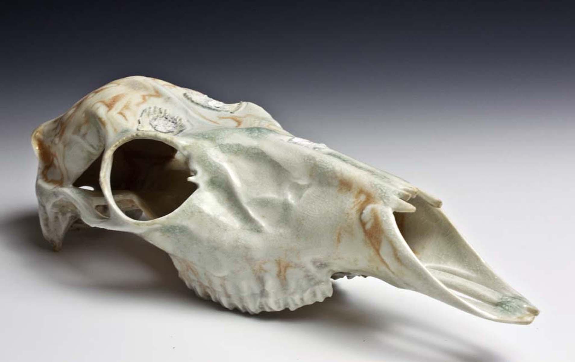 Bone Ash Deer