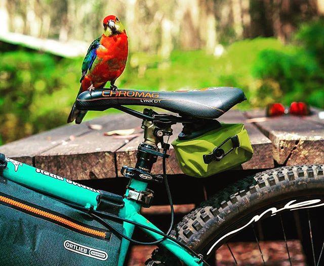 Your bike can take you to amazing places, it keeps you healthy and your even liked by birds 😍😍😍 #papagei #austrailia #perth @ryandownesphotos #thanksbuddy #ginrims #woodyenduro #ginaroundtheworld #ginexperience #gingin #gincarbonrims #biketravel #bikepacking #bike #mtb #mtblife #soenduro #fullenduro #enduromtb #hardtail #skills