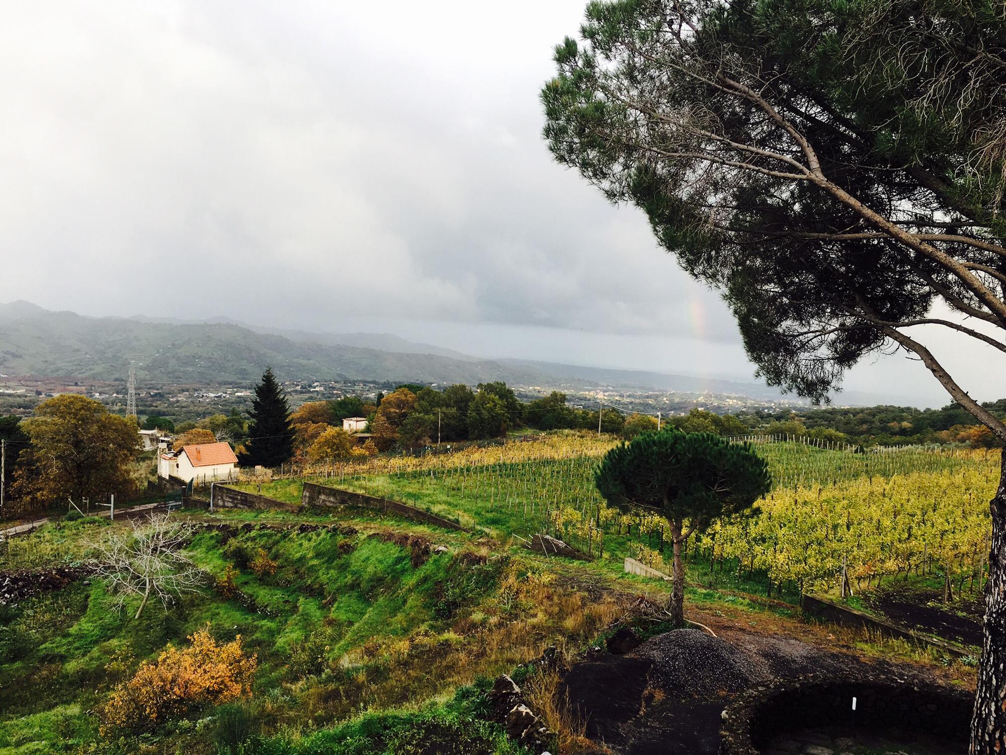 Views from Gambino Winery