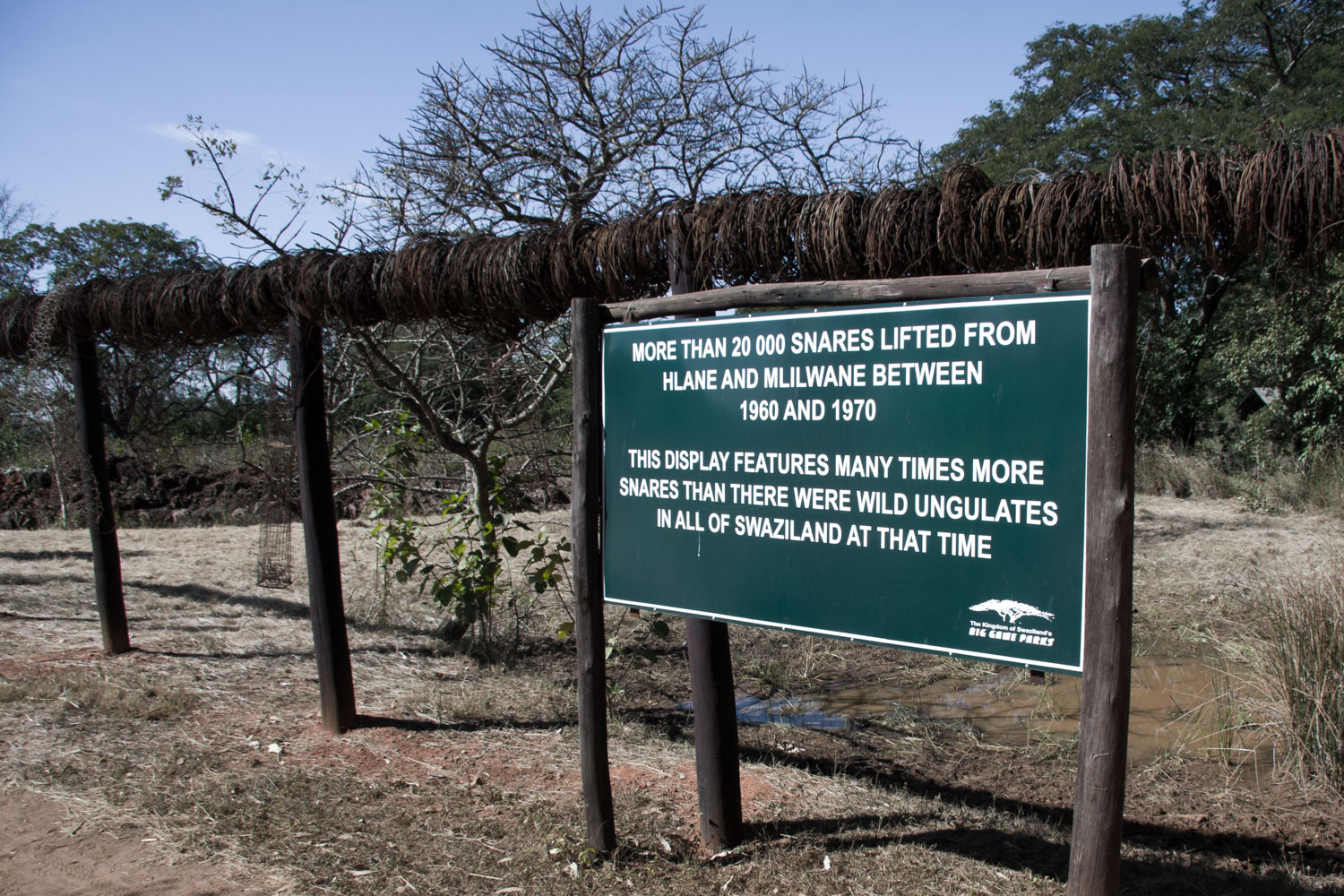 Snares in Swaziland