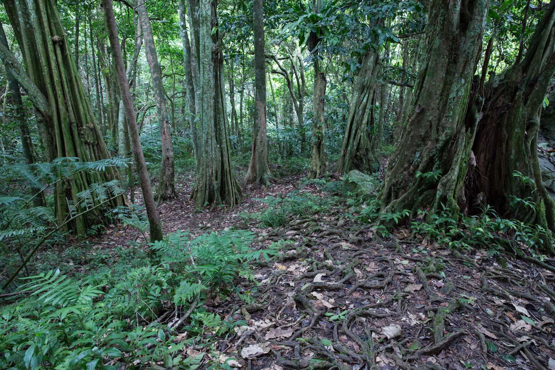 The cross-island trek