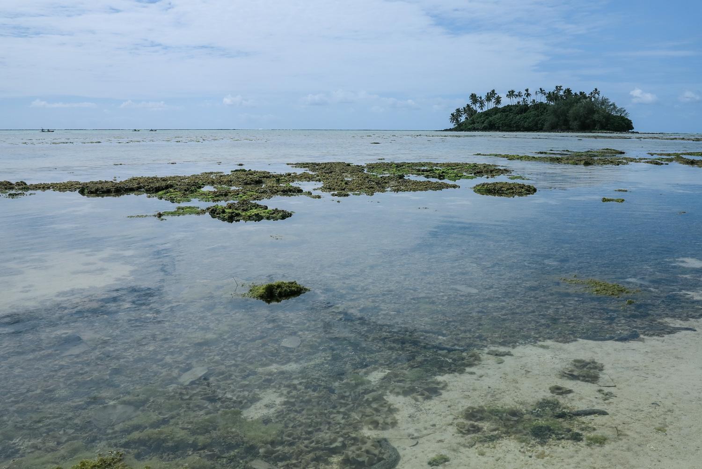 A blanket of algae in the lagoon