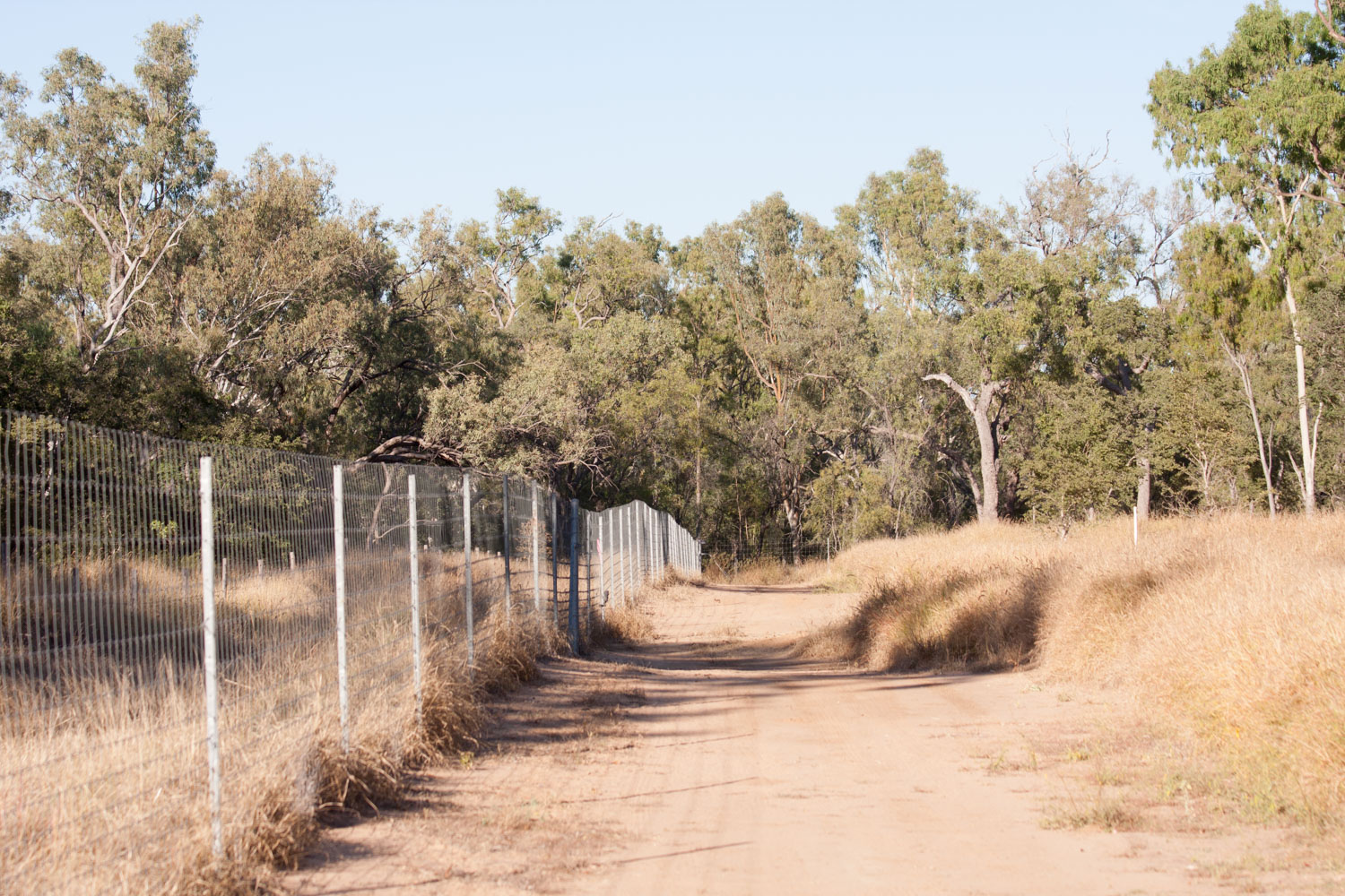 Predator-proof fence surrounding Epping Forest National Park