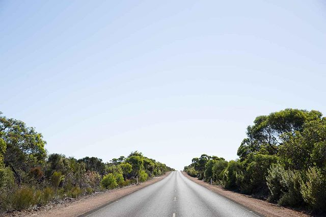 I'm missing the long, empty roads of Kangaroo Island. I'm so grateful to have had this gem as a field location for my PhD. It's a wild, raw place, abundant in wildlife. I'd happily spend any day here drinking local wines (The Glossy Black red from @dudleywines of course) and eating oysters fresh from the sea. I'll be back soon, KI 💙 #authenticKI