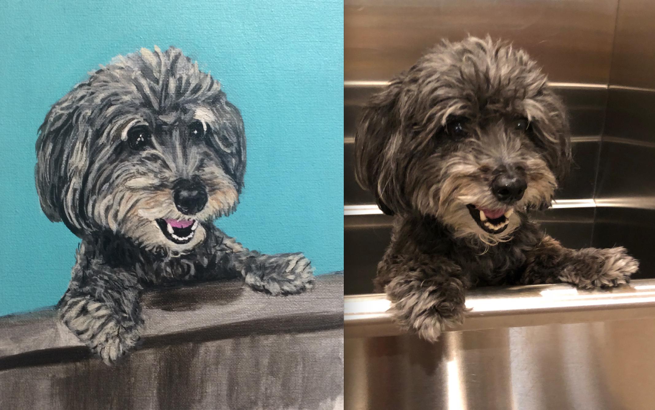 Ta-Da! Here's Bentley, the 2nd Happiest Dog.