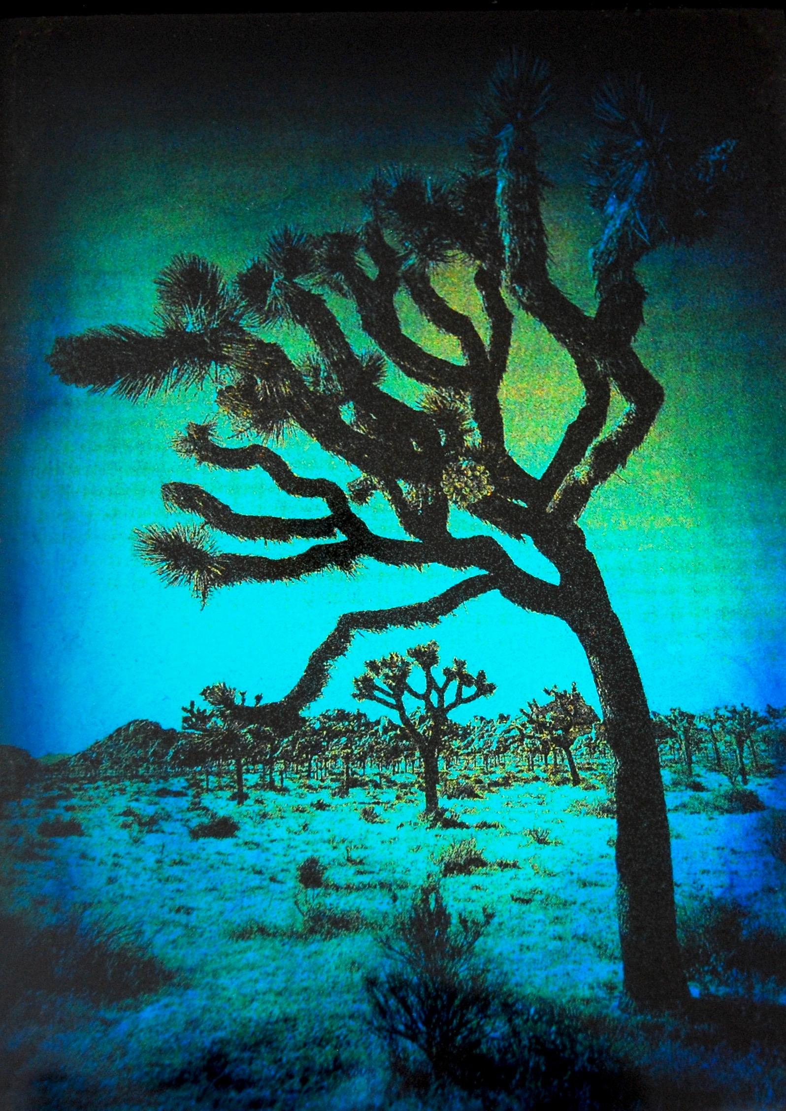"Julia King - Blue Joshua Tree (detail), 10 1/2""h x 8 3/4""w x 1 3/4""d, photography based 3-d mixed media, resin, pigment, handmade wood frame"