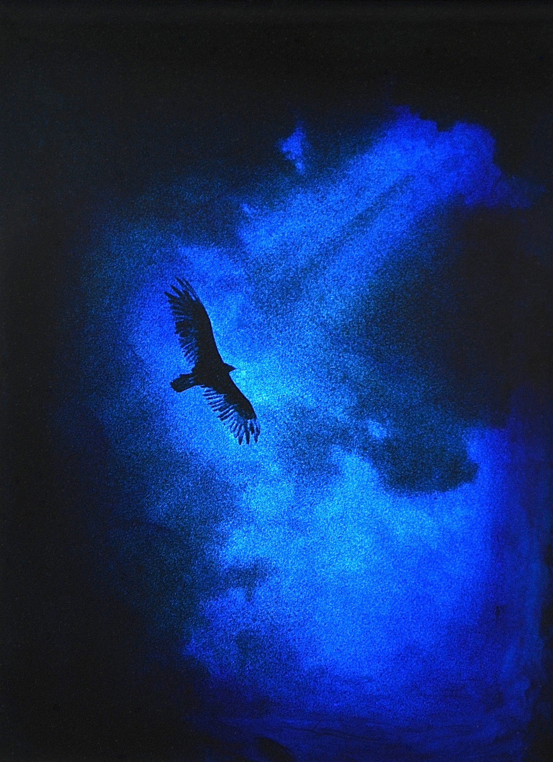 """Julia King - Blue Vulture (detail), 13""""h x 11""""w x 1 3/4""""d, photography based 3-d mixed media, resin, pigment, handmade wood frame"""
