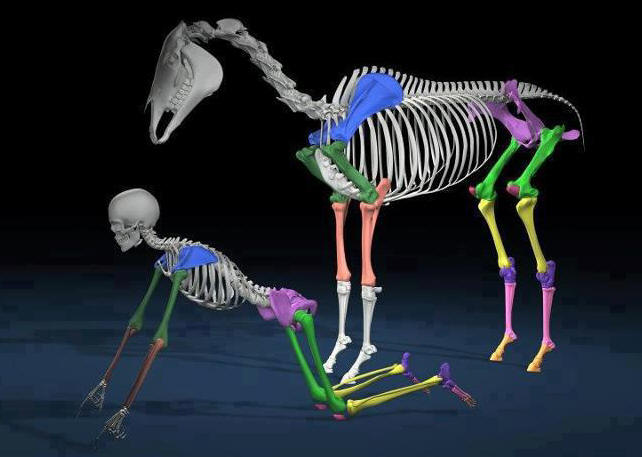 Comparable anatomy allows for unifying principles to emerge. If it does us good, the horse will benefit also.