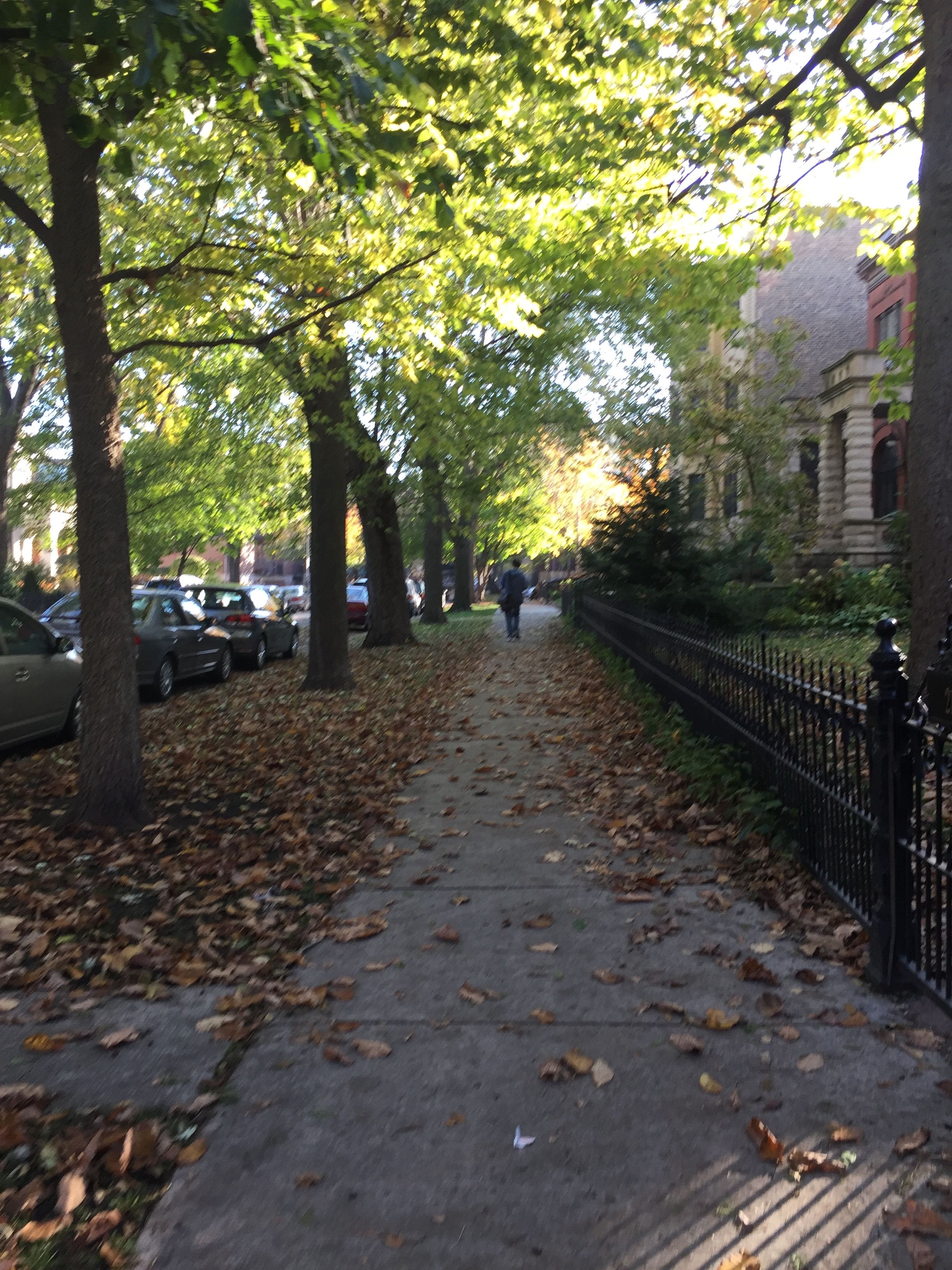 Streets of Chicago, near Humboldt Park.