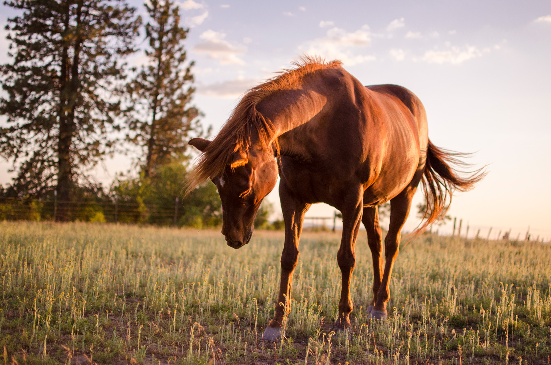 Drem, my faithful horse and friend for ten years.