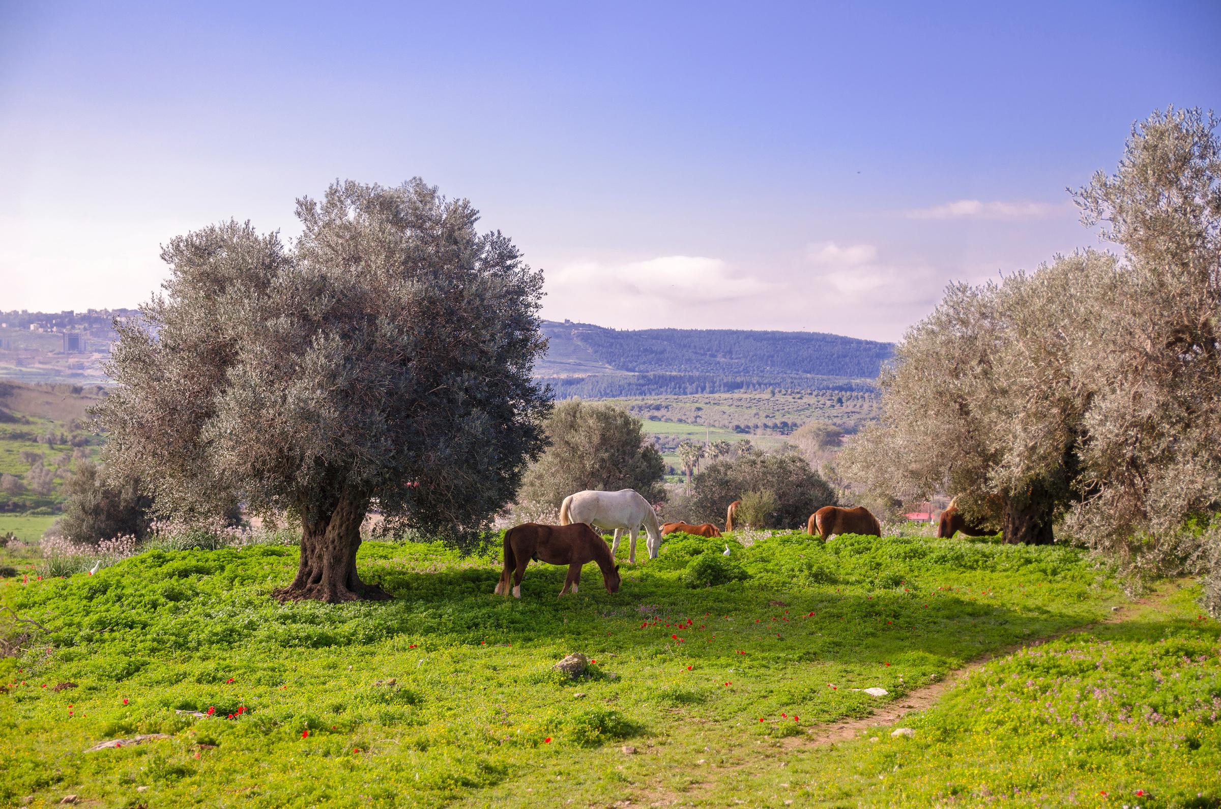 Israel47a.jpg