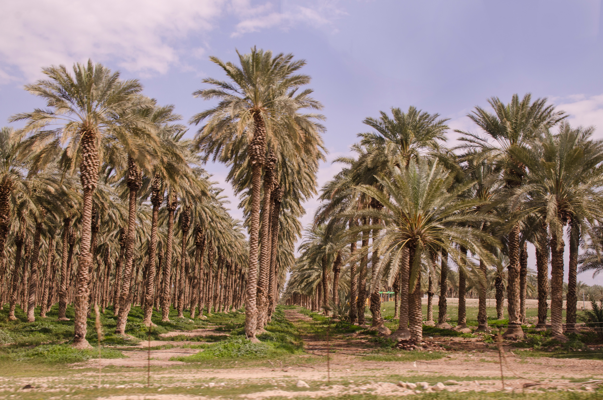 Israel101.jpg