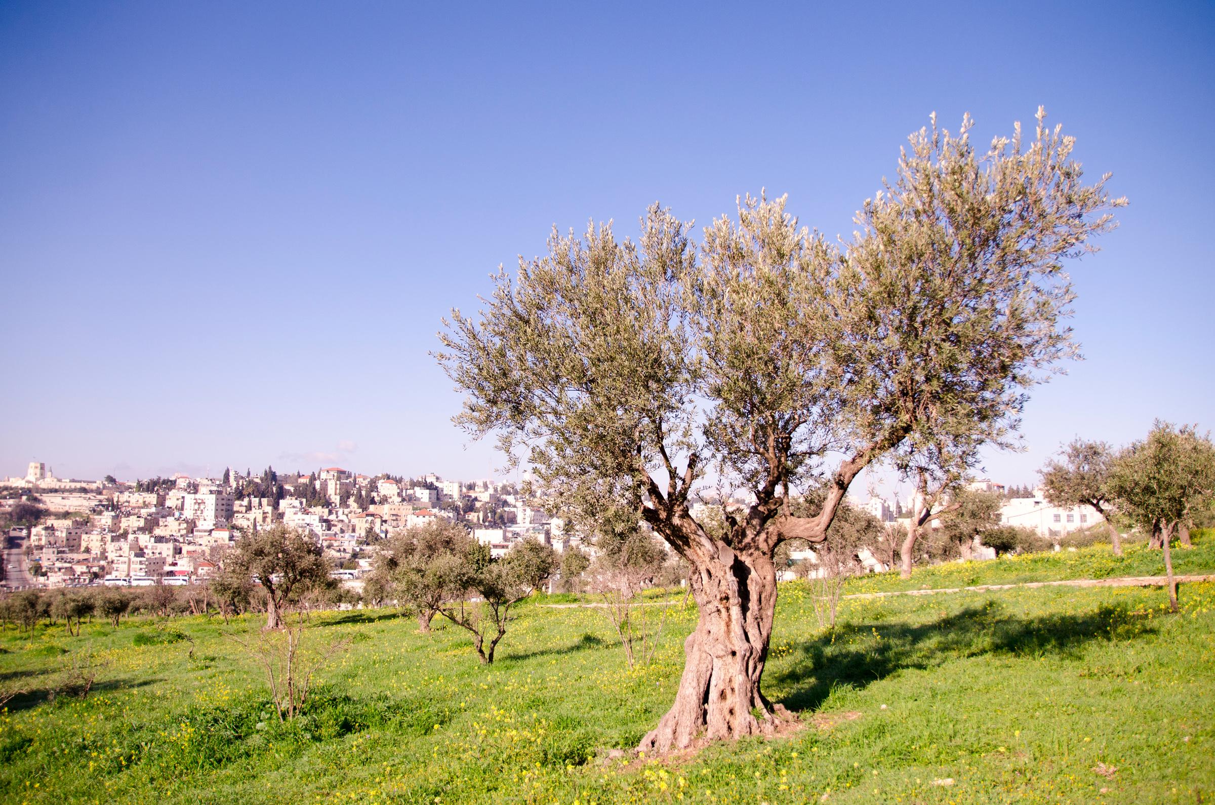 Israel159.jpg