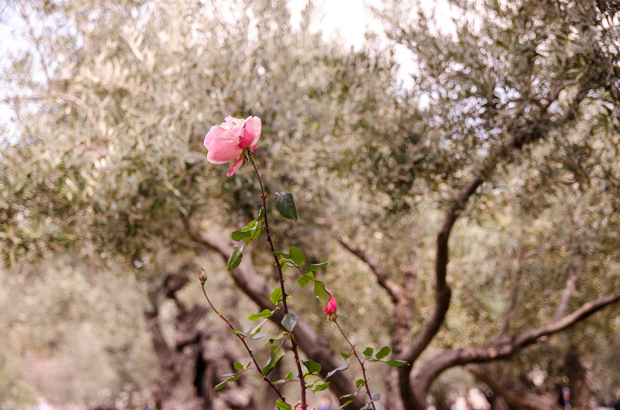 Israel171.jpg