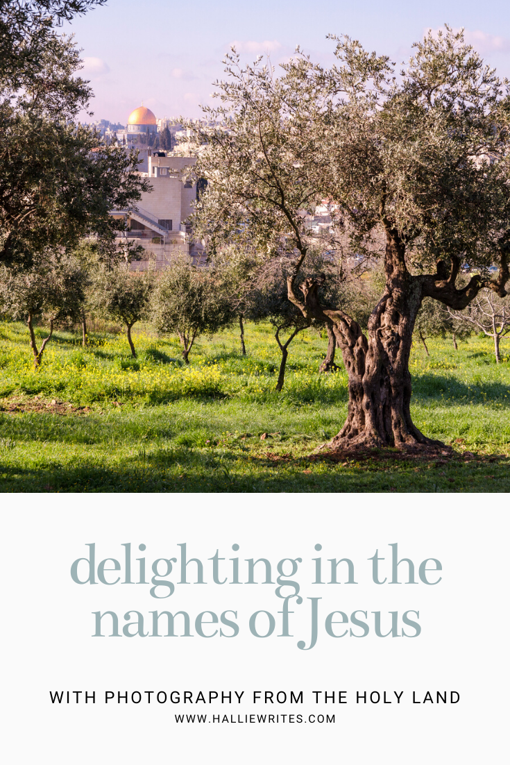 Delighting in the Names of Jesus Devotional Holy Land Photography.png