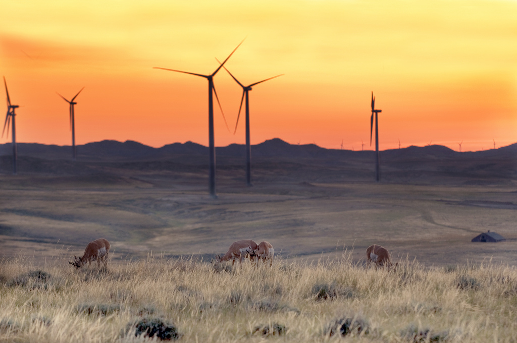 Pronghorn Wind Energy Project