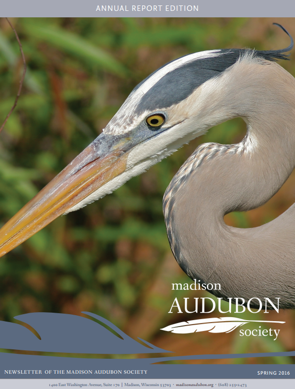 Emily was responsible for the design, layout, and content of the  Madison Audubon Society's quarterly print newsletter , above, from early 2015 through the fall of 2016.