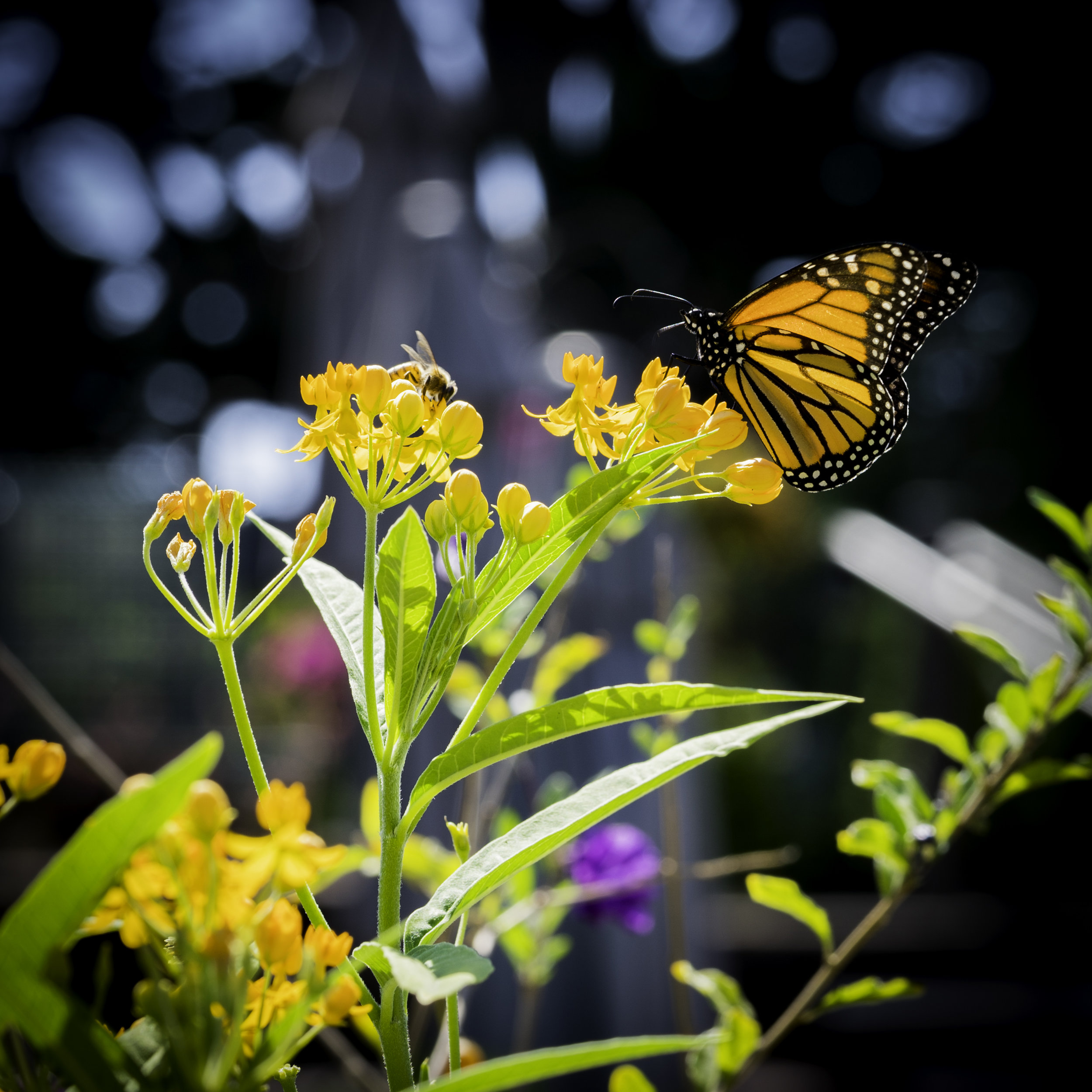 Pollinator Friendly Plants -