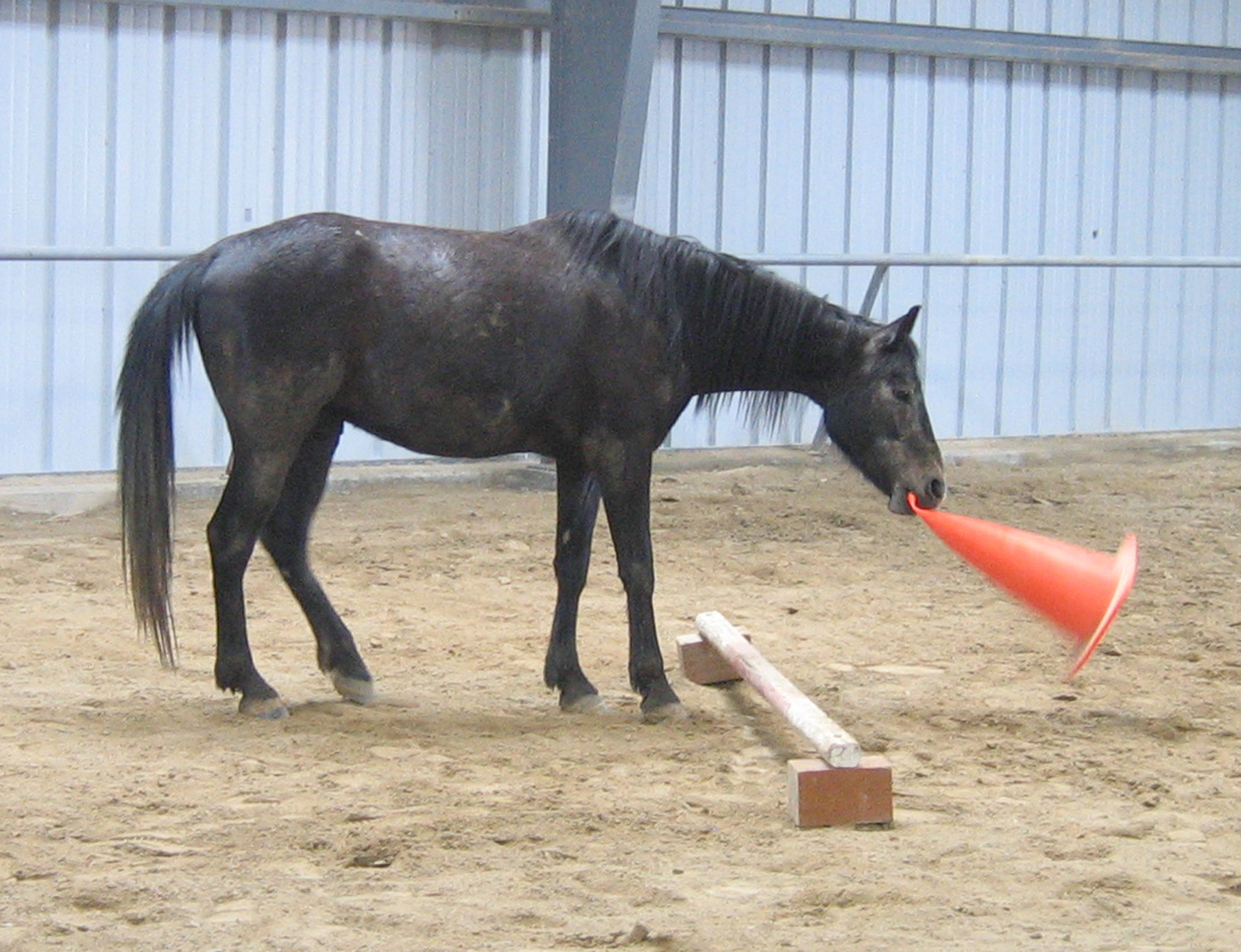 HorseCone.JPG