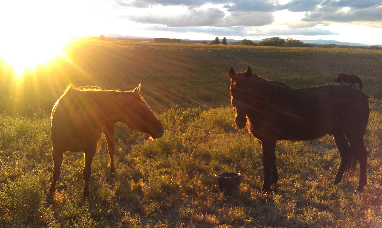HorseSunset.jpg