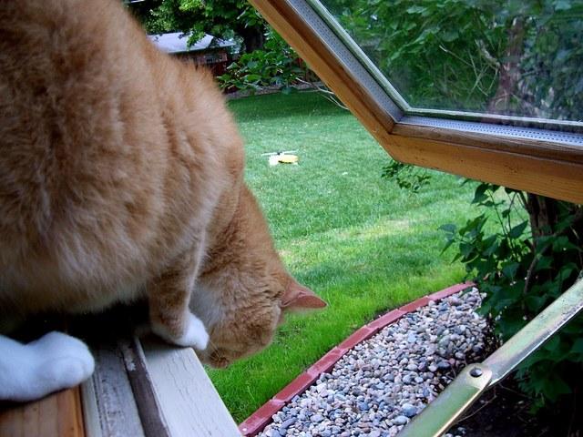 Cat out the window www.thehappyhabitat.com.au