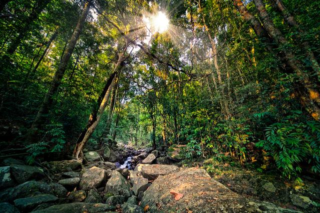 Rainforest www.thehappyhabitat.com.au