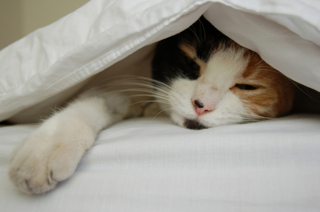 Bedding www.thehappyhabitat.com.au