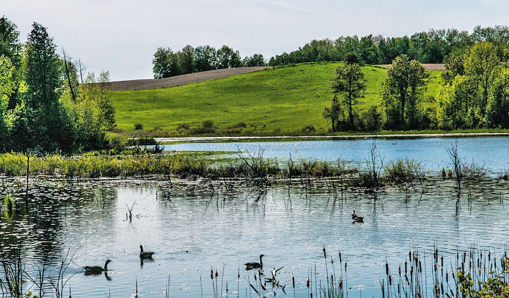 Serene lake with fish, and a sanctuary for birds and other wildlife – a wondrous place to be with your loved ones and at home with God. Click on the image for a larger view. Photo: Peter Bok