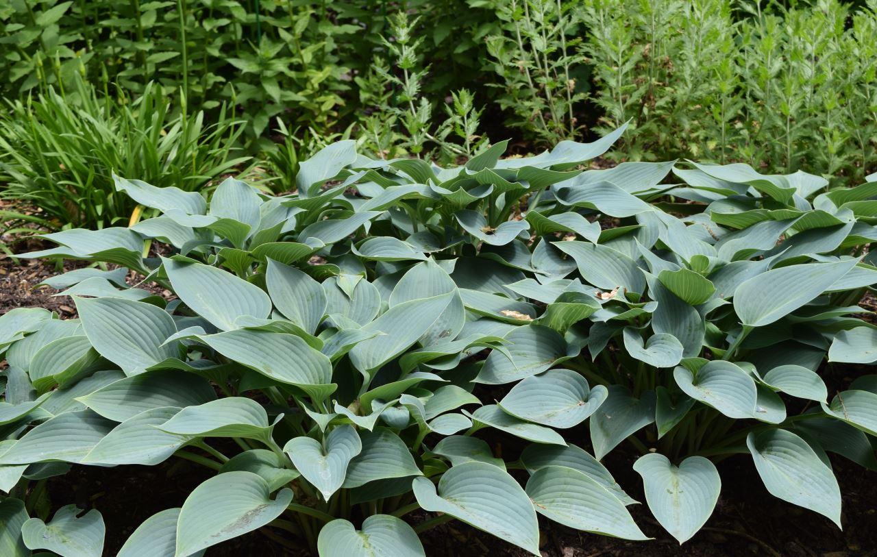 Setanta_Plants74.JPG