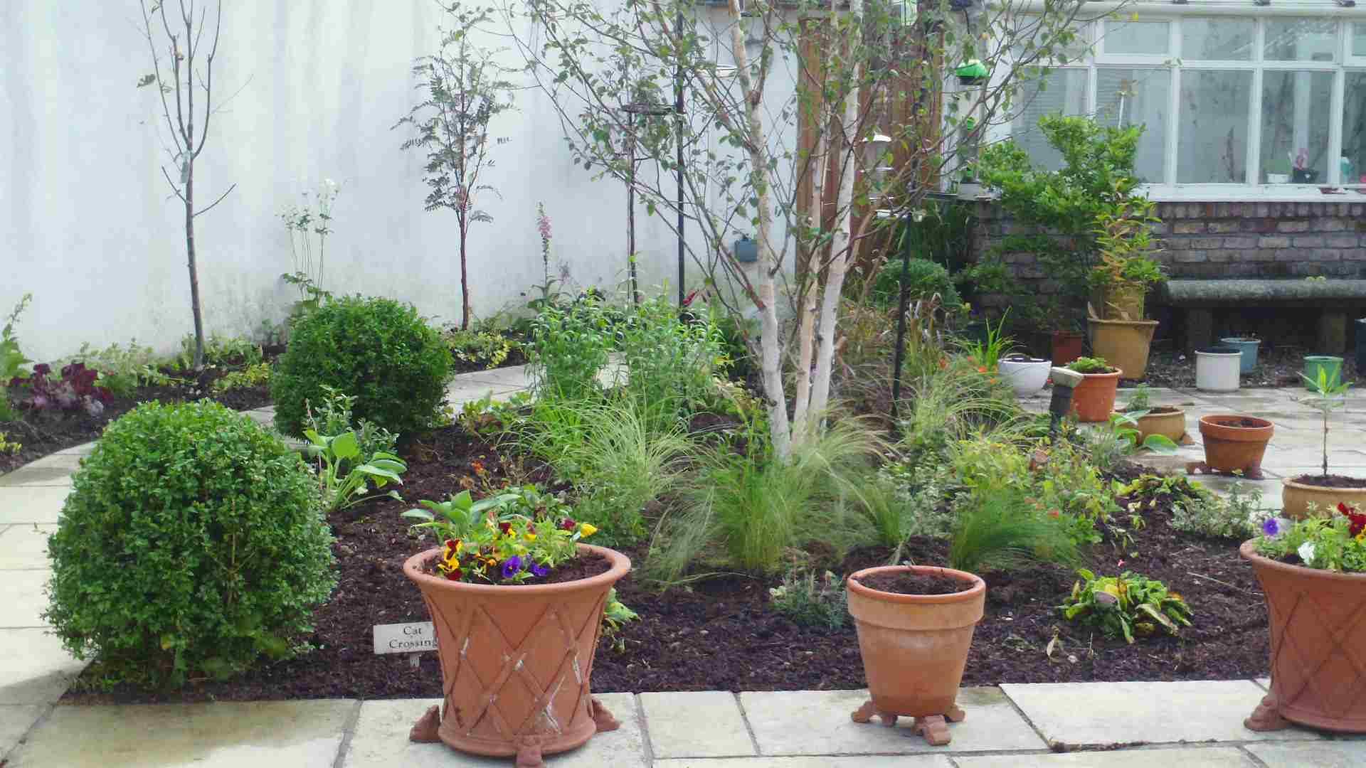 Setanta_Plants80.jpg