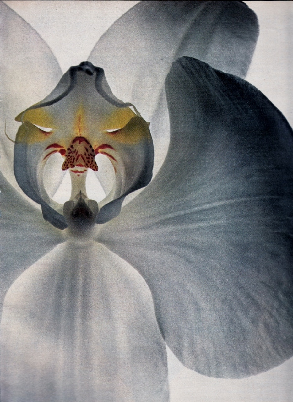 "mschristinamaria :    ""Specialists in Sex: Orchids"" by Irving Penn for US Vogue, December 1970"