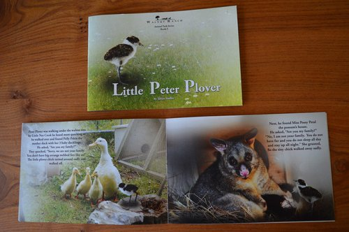 Little Peter Plover