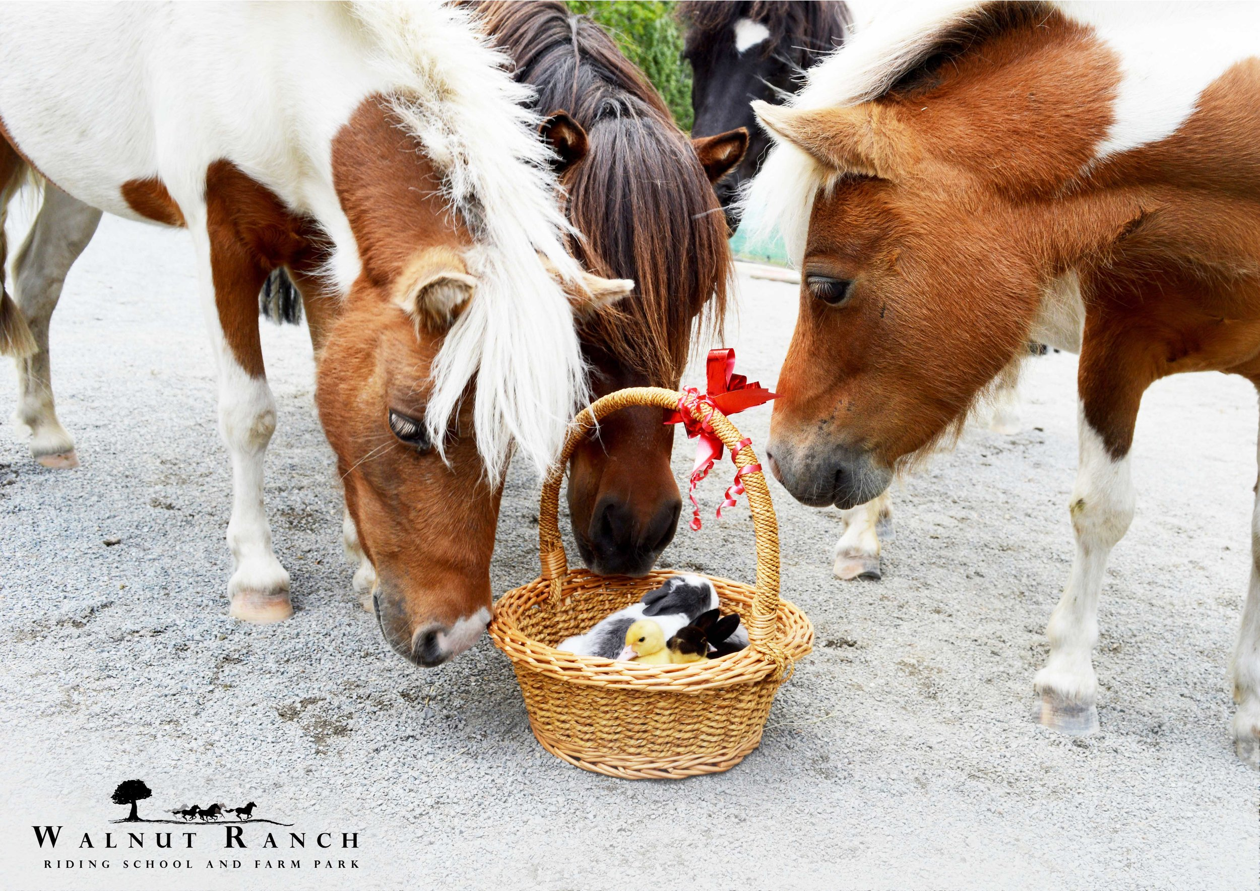 Ponies and the basket of Babies