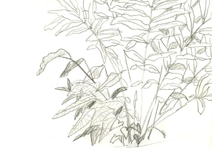plants2web.jpg