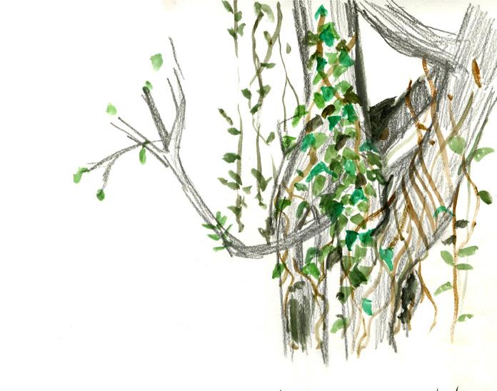 treevineweb.jpg