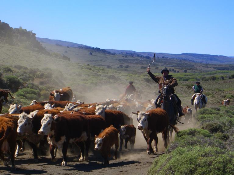 water cattle.jpg