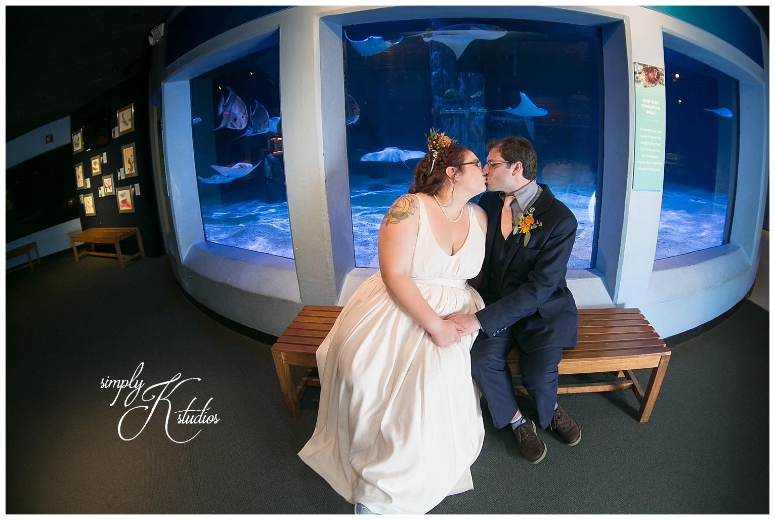 Stingray Tank at Mystic Aquarium.jpg