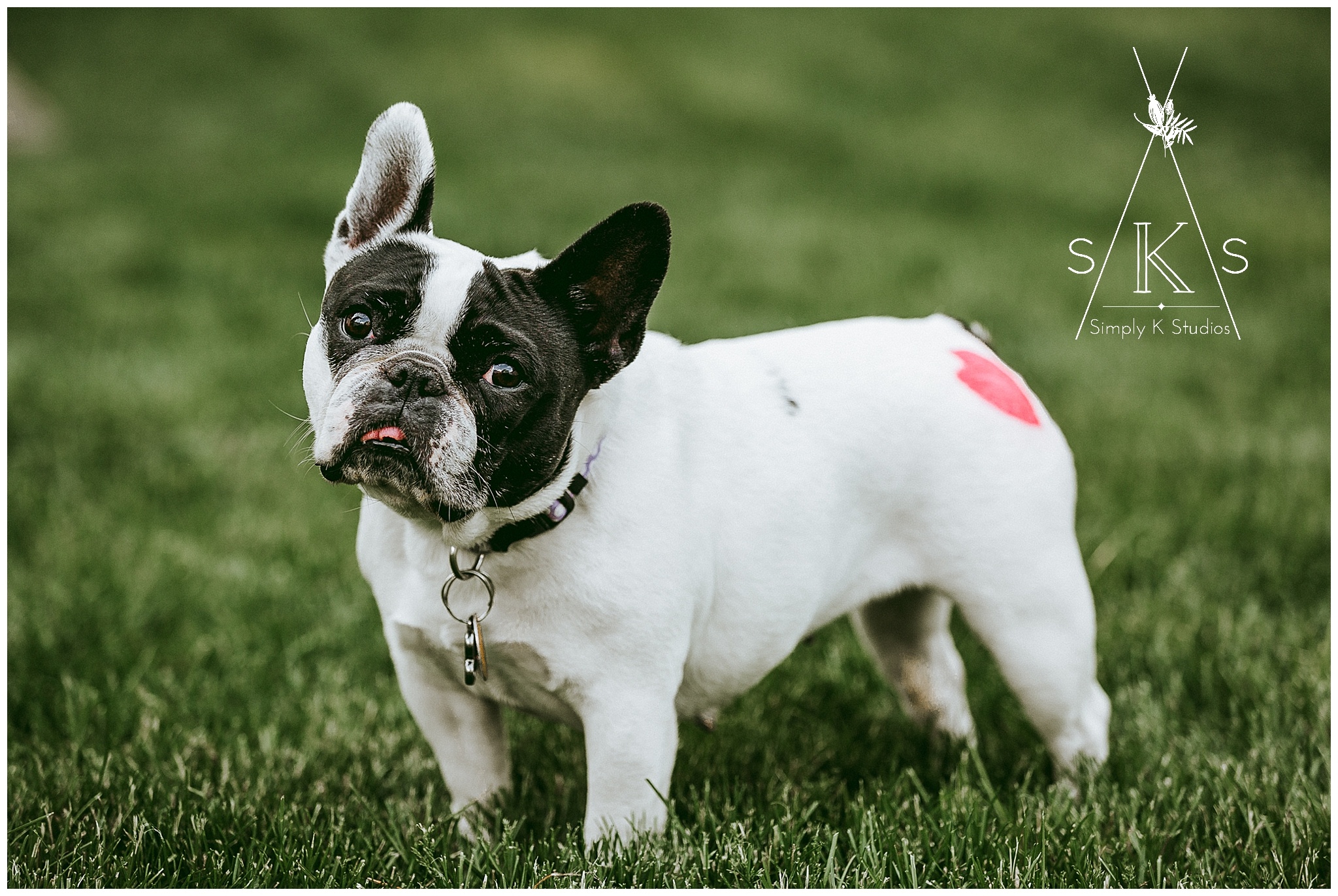 28 Connecticut Dog Portrait Photographers.jpg