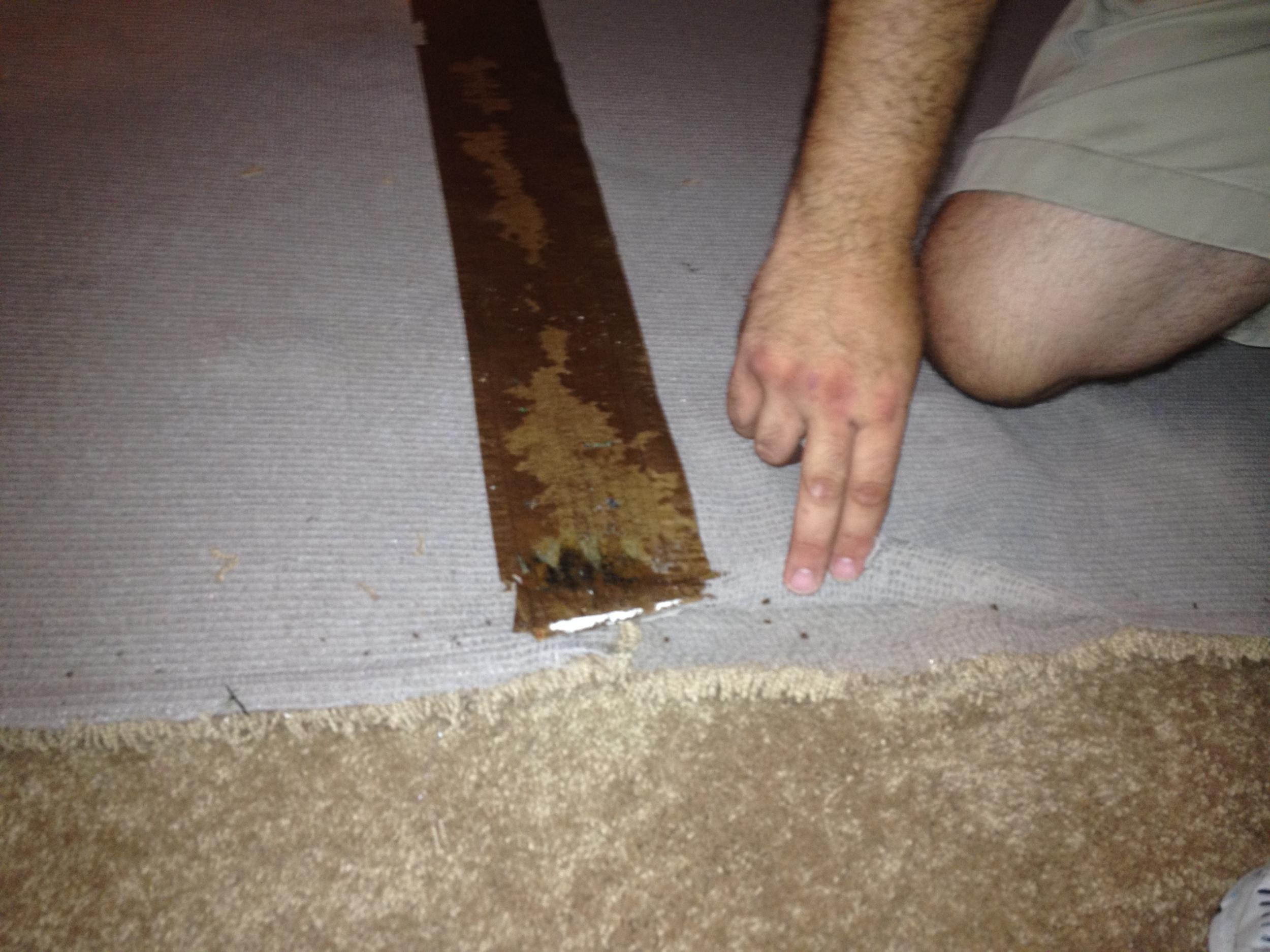 Carpet Delamination2.jpg