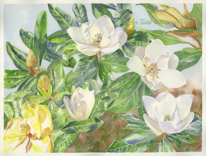 2013 magnolias--web.jpg