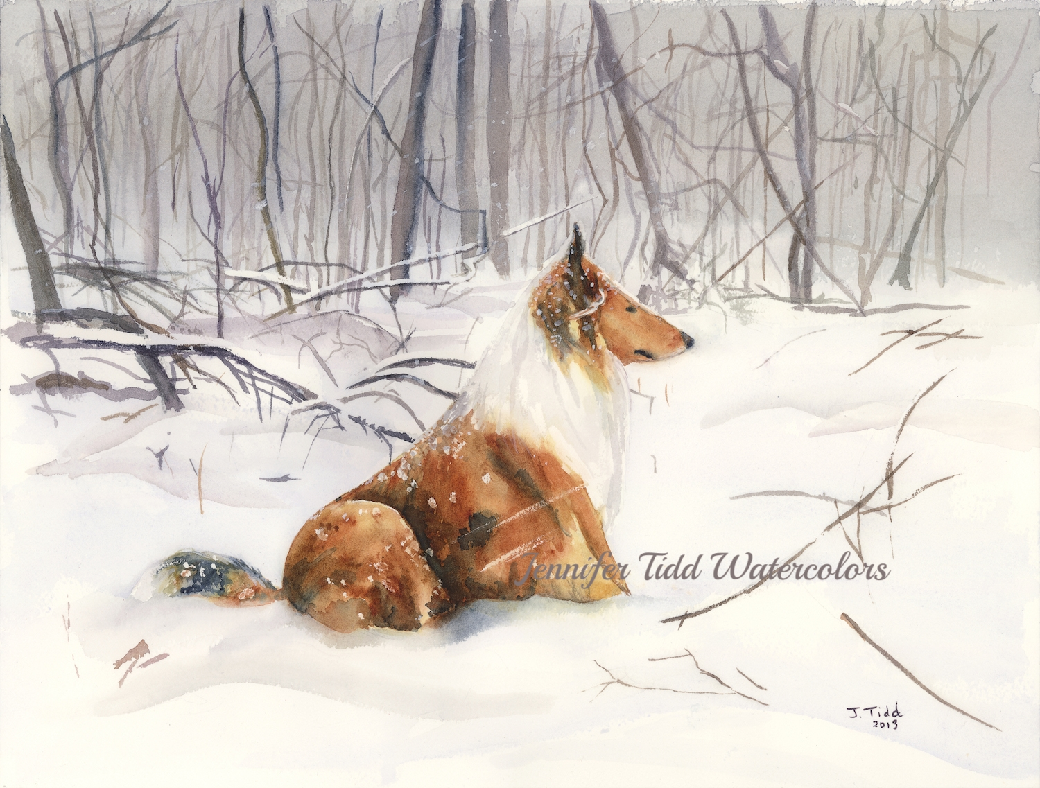 2013 snow collie--web.jpg