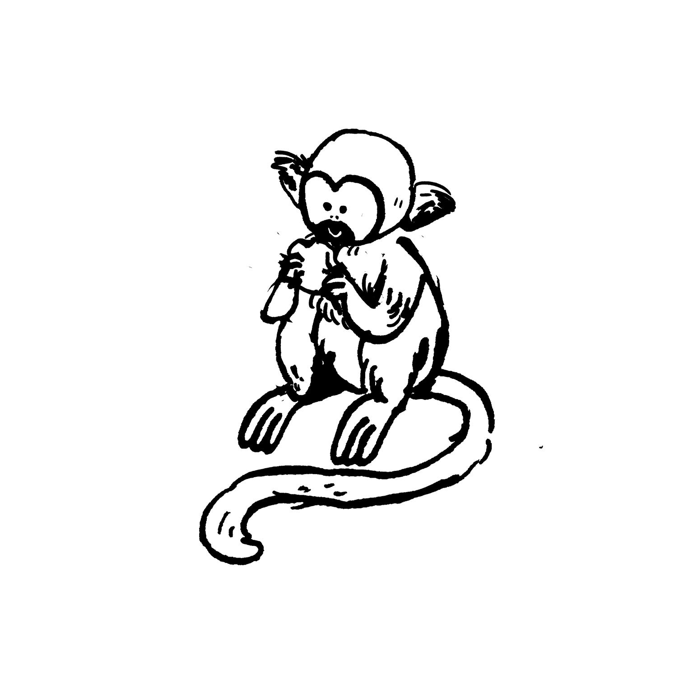 mandai_spot_0003_mspots_0028_Squirrel-Monkey.jpg