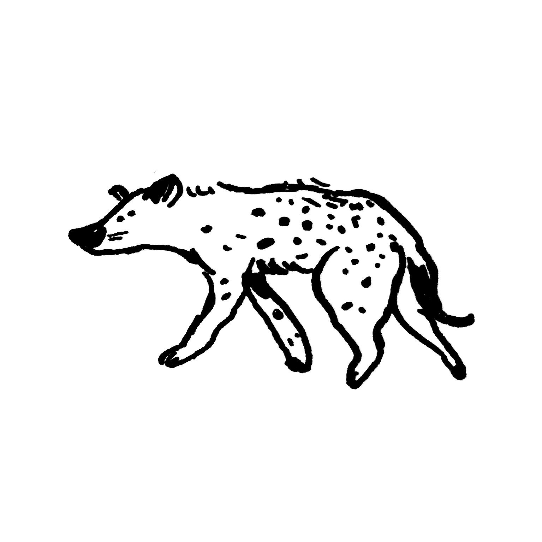 mandai_spot_0015_mspots_0017_Spotted-Hyena.jpg